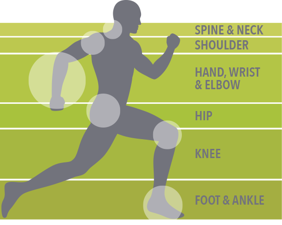 orthopedic surgeons - physical therapy - the woodlands and spring, Human Body